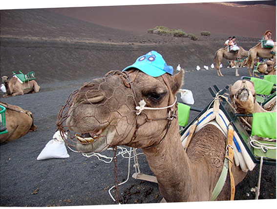 Adventure on a camel ride