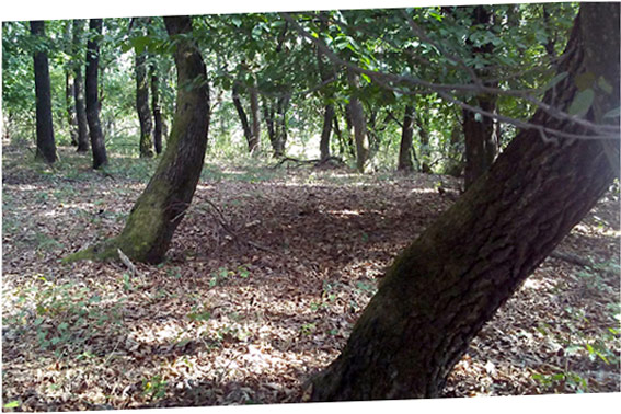 La foresta Hoia Baciu
