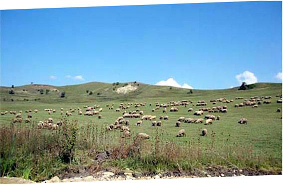 La splendida campagna rumena