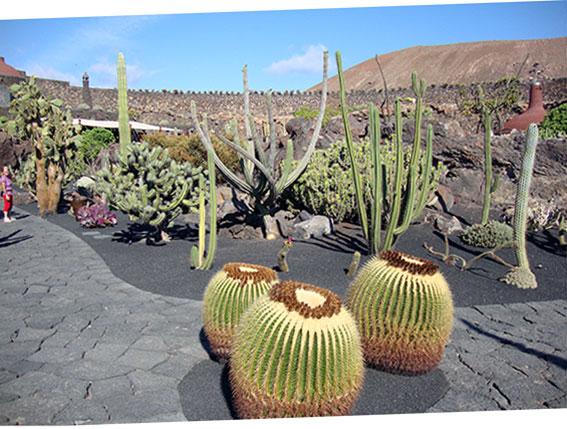 Parc botanique Jardín de Cactus