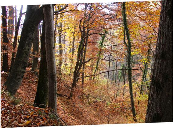 Veduta del bosco in autunno